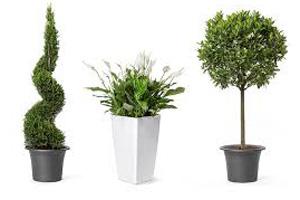 Pflanzen - Mietverleih